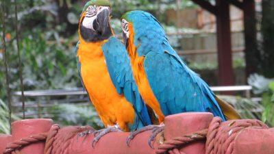 Обед с попугаем — художником