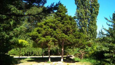 Сад Салгирка в Симферополе
